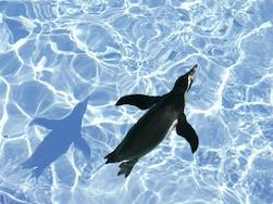 人気の水族館ランキングTOP5 涼しさと癒しを求めて!