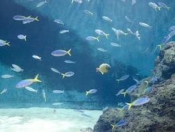 初心者でも熱帯魚の水槽をおしゃれにレイアウトできる7のコツ