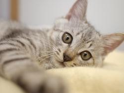 死ぬ前に姿を消す、目を見ちゃダメ……猫の噂・疑問10の真相