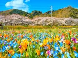 2016年に行きたい、東日本のおすすめお花見スポット20選