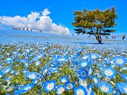 GWに行きたい! 5月に見頃を迎える全国おすすめ花見の名所15選