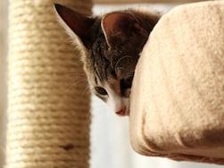猫歓喜!自作キャットウォーク実例・5選