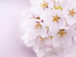 混雑していてもお花見したい!東京・桜の名所おすすめランキング10