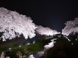 秘密にしておきたいけれど教えます。東京の穴場お花見スポット