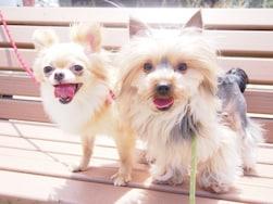 【犬の散歩】歩かない、吠えるなど問題行動を起こす犬のしつけ法
