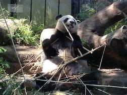 東京からも日帰りで行ける! おすすめの動物園特集